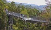 Canopy Walks ทางเดินศึกษาธรรมชาติสูงเสียดฟ้า ณ สวนพฤกษศาสตร์สมเด็จพระนางเจ้าสิริกิติ์