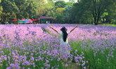 ทุ่งดอกหงอนนาค ศักดิ์สุภารีสอร์ท โลเคชั่นถ่ายรูปแบบคูลๆ ใกล้กรุงเทพฯ