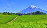 ท่องชิสุโอกะ เมืองลับแลแห่งชาเขียว