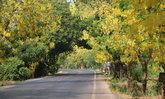 เปิดวาร์ปจุดเช็กอินถนนดอกคูนอุตรดิตถ์ เหลืองอร่ามยาวที่สุดในภาคเหนือกว่า 5 กิโลเมตร