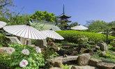 เทศกาลชมดอกโบตั๋นฤดูใบไม้ผลิบานกว่า 600 ต้นในกรุงโตเกียวเริ่มต้นแล้ว!
