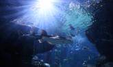 ใกล้ชิดและทักทายฉลามกว่า 15 สายพันธุ์ ณ ซีไลฟ์ แบงคอก ต้อนรับปิดเทอม