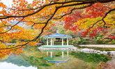 2019 ใบไม้เปลี่ยนสีที่เกาหลี เที่ยวไหนดี?