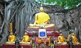 เที่ยววัดไทร ชมความงามของรากโพธิ์โอบรัดโบสถ์ ที่สิงห์บุรี