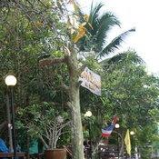 คาราวานพาตูบ พาเหมียวเที่ยวไทย
