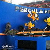 อาณาจักรปลาการ์ตูน เพอคูล่า ฟาร์ม (PERCULA FARM)
