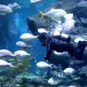 เปิดคลิปดูแลสัตว์น้ำแสนน่ารักใน SEA LIFE Bangkok ช่วงโควิด-19 ระบาด