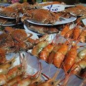 เทศกาลกินหอย ดูนก ตกหมึก ประจำปี 2554