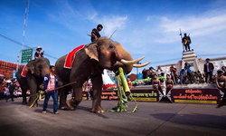 ชวนเที่ยวงาน มหัศจรรย์งานแสดงช้างสุรินทร์ ประจำปี 2563