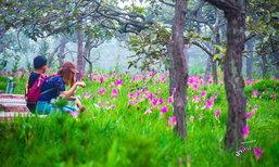 ทุ่งดอกกระเจียวบานแล้ว ความงดงามประจำปีที่อุทยานแห่งชาติป่าหินงาม