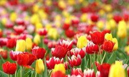 มหัศจรรย์เทศกาลไม้ดอก เพ ลา เพลิน จ.บุรีรัมย์