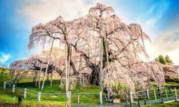 3 อันดับที่เที่ยวใหม่มาแรงของญี่ปุ่น!