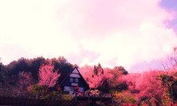 บ้านยิ้มได้สูงเสียดฟ้า กลางป่าสีชมพู @ขุนสถาน