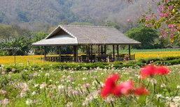 หลองข้าวสะเมิง สวรรค์กลางหุบเขาสำหรับคนที่รักดอกไม้