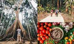 ท่องเที่ยวชุมชนบ้านสะนำ ชมต้นไม้ยักษ์อายุกว่า 500 ปี สัมผัสวิถีชุมชนลาวครั่งโบราณ