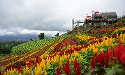 ภูวินคาเฟ่ ม่อนแจ่ม คาเฟ่กลางสวนดอกไม้และสกายวอล์ควิวภูเขาแบบพาโนรามา