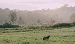 เที่ยวภูเขียว ส่องสัตว์ สัมผัสธรรมชาติ