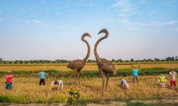 รังนกแลนด์ By นกแปดริ้ว ที่เที่ยวใหม่ถ่ายรูปสวย ฉะเชิงเทรา