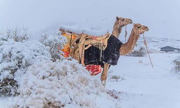 หิมะตกในทะเลทราย Sahara เป็นครั้งแรกในรอบ 50 ปี อุณหภูมิ - 2 องศา