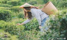 """เสน่ห์ชุมชนไทยไม่ไปไม่รู้ """"นอนบ้านดิน ถิ่นชิมชา ชุมชนจีนยูนนาน"""" บ้านรักไทย จ.แม่ฮ่องสอน"""