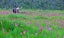 พาชมทุ่งดอกกระเจียวกลุ่มสุดท้ายของประเทศไทยในปีนี้ !! @ อุทยานแห่งชาติไทรทอง