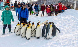 พาชมความน่ารักของเพนกวินเดินขบวน @ สวนสัตว์ Asahiyama