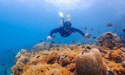"""สำรวจโลกใต้ทะเล """"อ่าวแสมสาร"""" ปะการังสวย น้ำทะเลใสใกล้กรุงเทพฯ"""