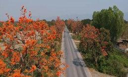 ถนนสายดอกไม้สุดโรแมนติก รับวาเลนไทน์