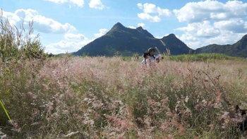 ทุ่งดอกหญ้าสีชมพู อันซีนแห่งเมืองขอนแก่น มุมถ่ายรูปสวยที่ต้องไปเช็กอิน