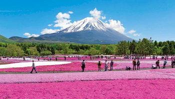 รวม 4 เทศกาล ชิบะซากุระ 2021 ทุ่งพิงค์มอสสุดอลัง ต้องไปดูสักครั้งที่ญี่ปุ่น!
