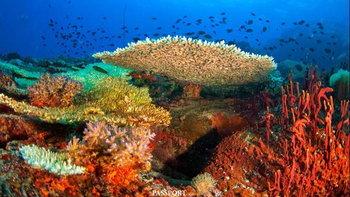 เกาะโลซิน แหล่งดำน้ำทรงคุณค่าแห่งอาณาจักรทะเลไทย