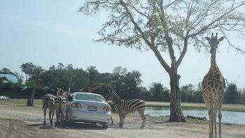 ซาฟารีปาร์ค กาญจนบุรี สวนสัตว์เปิดที่สมบูรณ์แบบที่สุดในประเทศไทย
