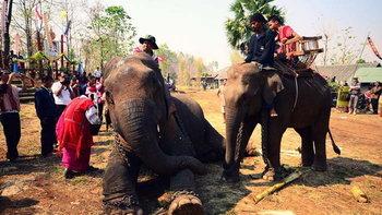 กิจกรรมวันช้างไทย ที่วัดบ้านปูเต้อ อ.แม่สอด จ.ตาก