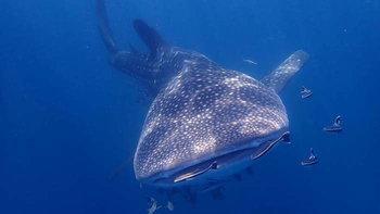 พาชมโลกใต้ทะเลเกาะร้านเป็ด เกาะร้านไก่ ตามหาฉลามวาฬในตำนาน