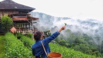 รีวิวไร่ชาลุงเดช นอนกลางไร่ชา สัมผัสหมอกหนาๆ ในราคาหลักร้อย!