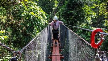 รีวิว DoiTung Tree Top Walk ท้าทายความกล้าบนทางเดินสกายวอล์คสูง 40 เมตร!!!