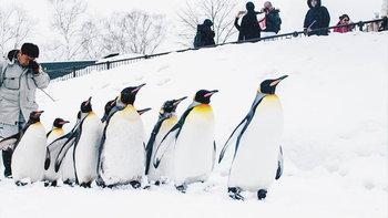 รีวิวเที่ยว Asahikawa ชมพิพิธภัณฑ์หิมะและสวนสัตว์ที่น่ารักที่สุดใน Hokkaido