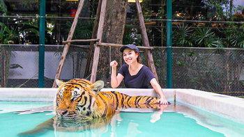 Tiger Park Pattaya อาณาจักรแห่งเสือ ที่คุณสามารถเข้าไปเล่นด้วยได้อย่างใกล้ชิด