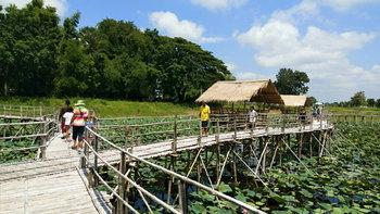 ทุ่งดอกบัวชมพู สะพานไม้รักร้อยรวมใจ จุดเช็กอินใหม่โคราช