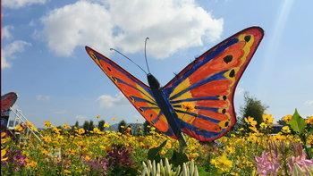 สวนดอกไม้ผีเสื้อวังน้ำเขียว ที่เที่ยวใหม่เมืองโคราช