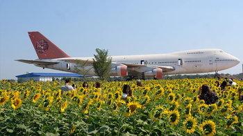 ทุ่งดอกทานตะวันวิวเครื่องบิน จุดเช็กอินถ่ายรูปสวยใกล้กรุงเทพฯ