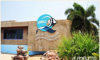 เปิดประตูสู่โลกใต้ทะเล สถานแสดงพันธุ์สัตว์น้ำจังหวัดระยอง