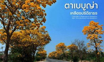 ถนนสายดอกไม้ เหลืองปรีดียาธร งดงามอร่ามตา ที่สุพรรณบุรี