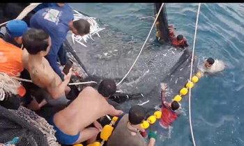 ชาวประมงพบฉลามวาฬยักษ์ใหญ่โผล่กลางทะเลสตูล