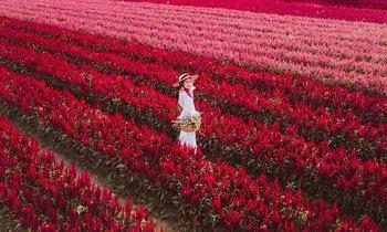 I Love Flower Farm สวนดอกไม้สีแดงสุดอันซีนราวกับอยู่ฮอกไกโด