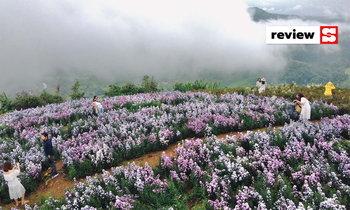 ยิ่งยงสวนดอกไม้ ม่อนแจ่ม ทุ่งดอกมาร์กาเร็ตลอยฟ้าสุดอลังการ