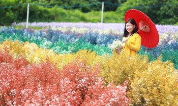สุรชัยฟาร์ม สวนเชียงใหม่ ทุ่งดอกไม้สายรุ้งหนึ่งเดียวในเมืองไทย!