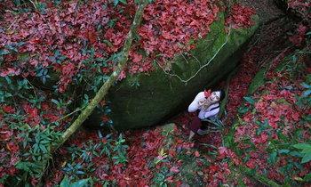 ชมเมเปิ้ลผลัดใบเป็นสีแดงสดทั่วหน่วยพิทักษ์น้ำตกหมันแดง พิษณุโลก