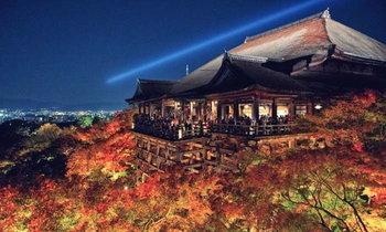 เทศกาลไฟประดับฤดูใบไม้ร่วงกว่า 500 ดวงที่วัดคิโยะมิซุ พร้อมชมความงามของต้นเมเปิ้ล