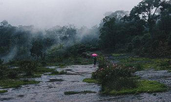 หมอกล้อมป่า ภูหินร่องกล้าในหน้าฝน